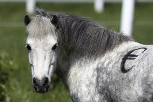 pony-euro